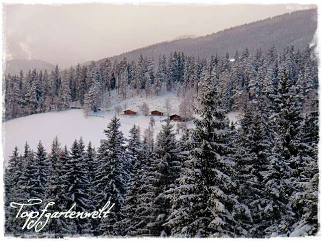 Gartenblog Topfgartenwelt Schlittenfahren: verschneiter Wald in Altenmarkt mit Hütten
