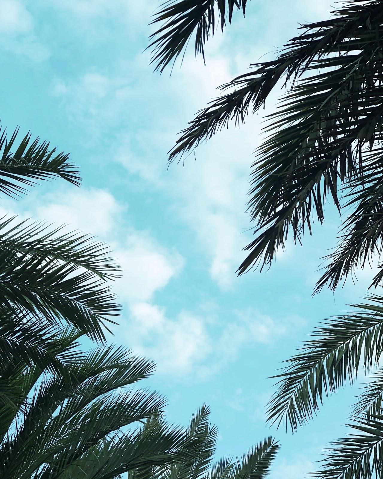 ourdubalilife.com Staycation Guide to Abu Dhabi