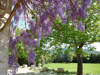 mandelbaum schneiden wann