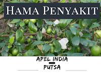 Wajib Tahu!! Hama & Penyakit Tanaman Apel India 'Putsa'