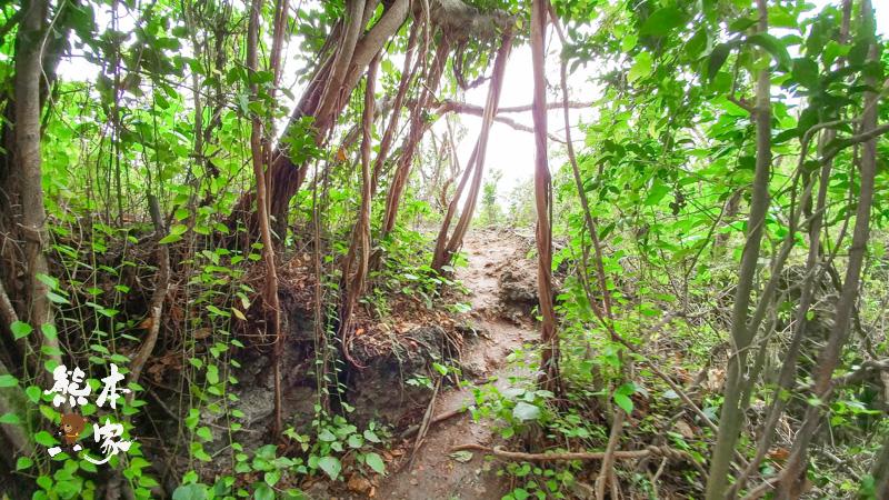 百年老榕樹|小琉球制高點眺望厚石裙礁|小琉球秘境|小琉球鬼故事