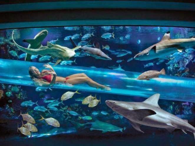 Nade com tubarões no Golden Nugget em Las Vegas