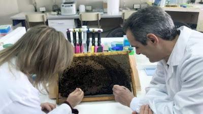 668064 600 338 - La UV, única entidad europea en un proyecto para controlar el ácaro de las abejas Varroa destructor - El Apicultor Español: Actitud y Aptitud