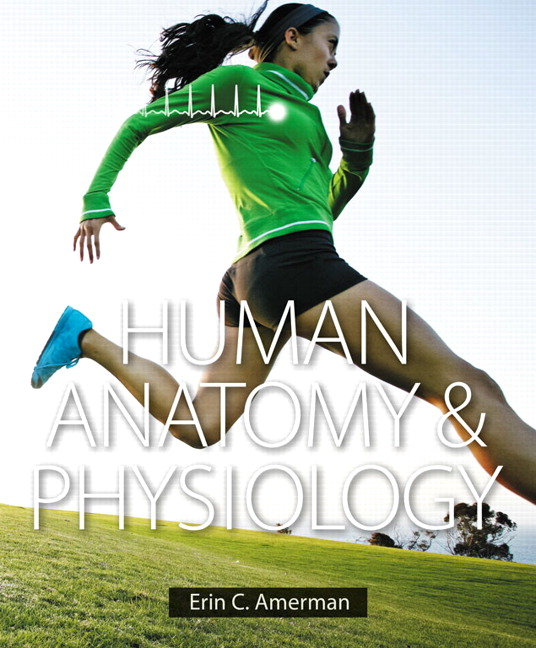 Test Bank For Human Anatomy Physiology 1st E By Amerman Test