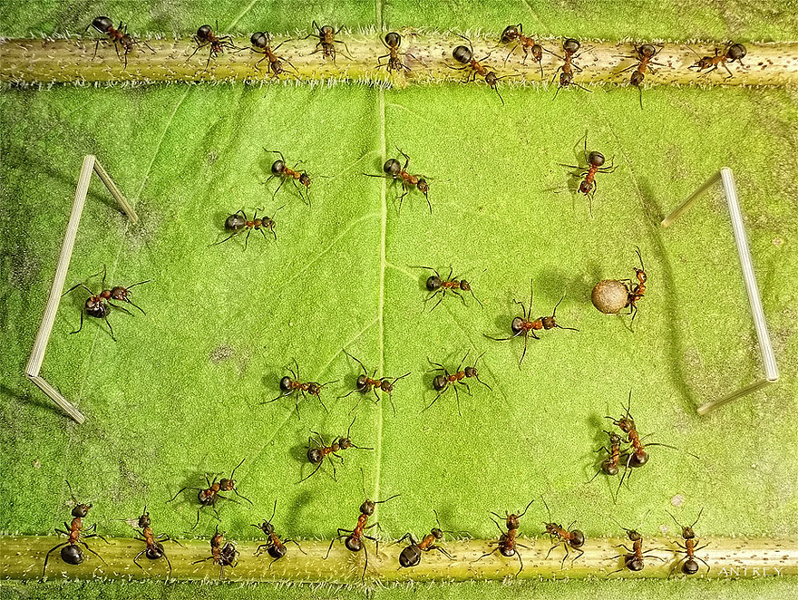 12-Soccer-Football-Game-Andrey-Pavlov-Photographs-of-Ants-an-Affordable-Journey-to-a-Parallel-World