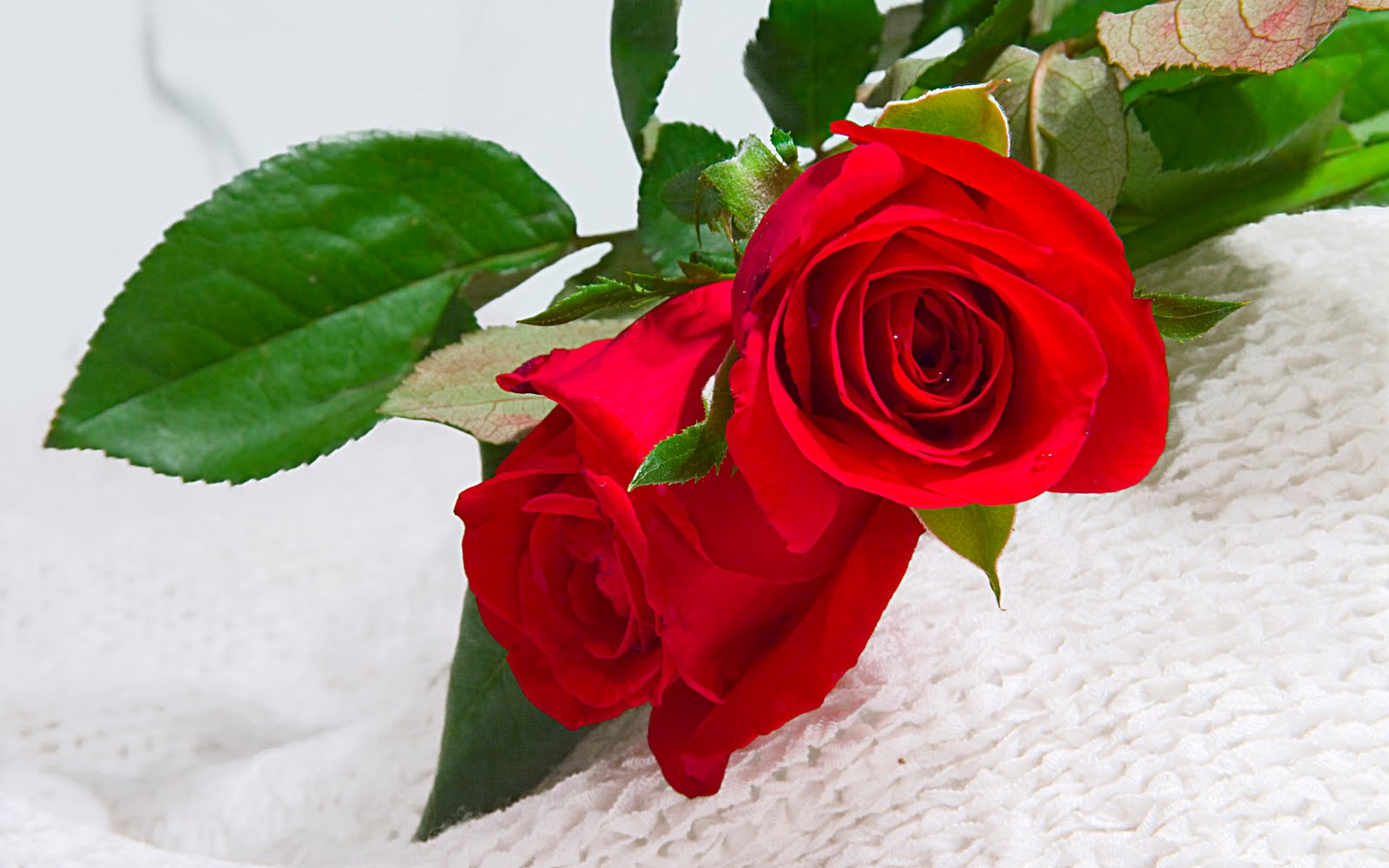 Red roses wallpaper wallpaper wide hd - Red rose flower hd images ...