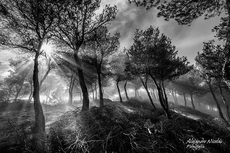 Palencia. Páramo de la Miranda- bosque