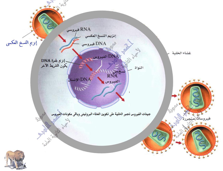 إستنساخ تتابعات dna -  عملية الإستنساخ – الفيروسات – المحتوى الجينى rna– أحياء الثالث الثانوى