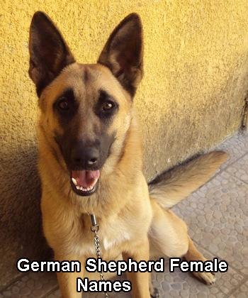 German Shepherd Female Names