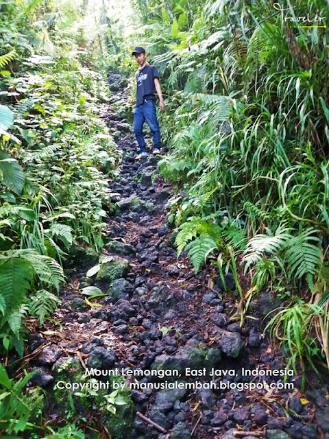Pendakian Gunung Lemongan via Klakah