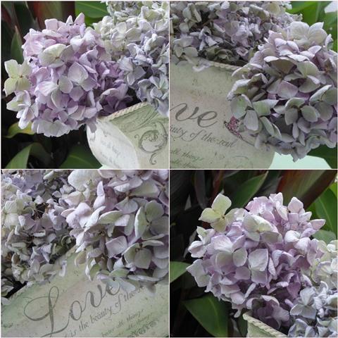 Les cosetes de dudu como secar hortensias - Como secar hortensias ...