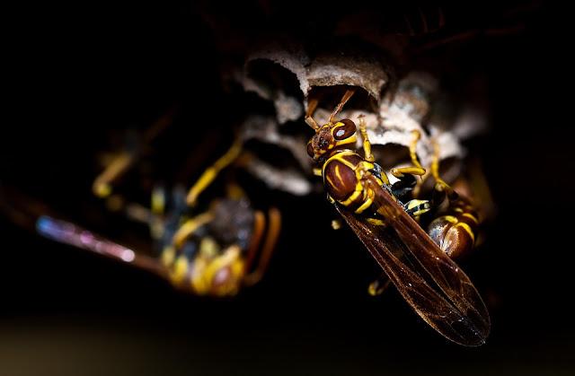 لن تصدق فوائد العسل الأسود للشعر