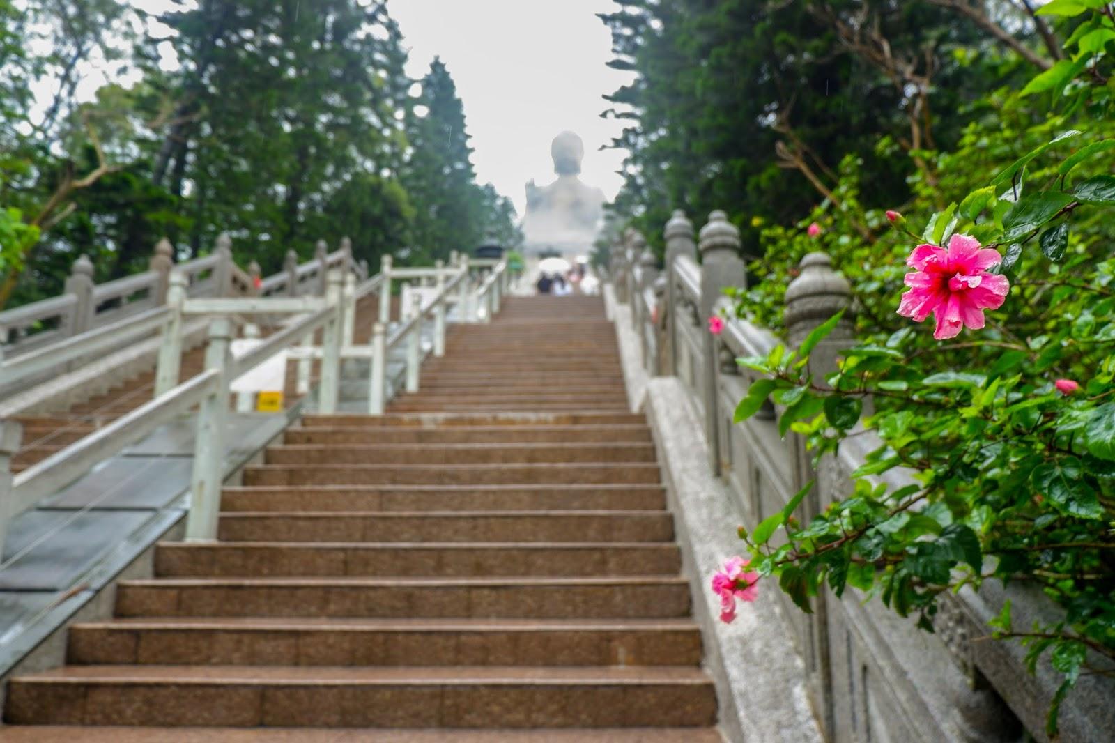 how to get to tai o from big buddha