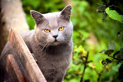 Cute Cats Kitty Pets 11