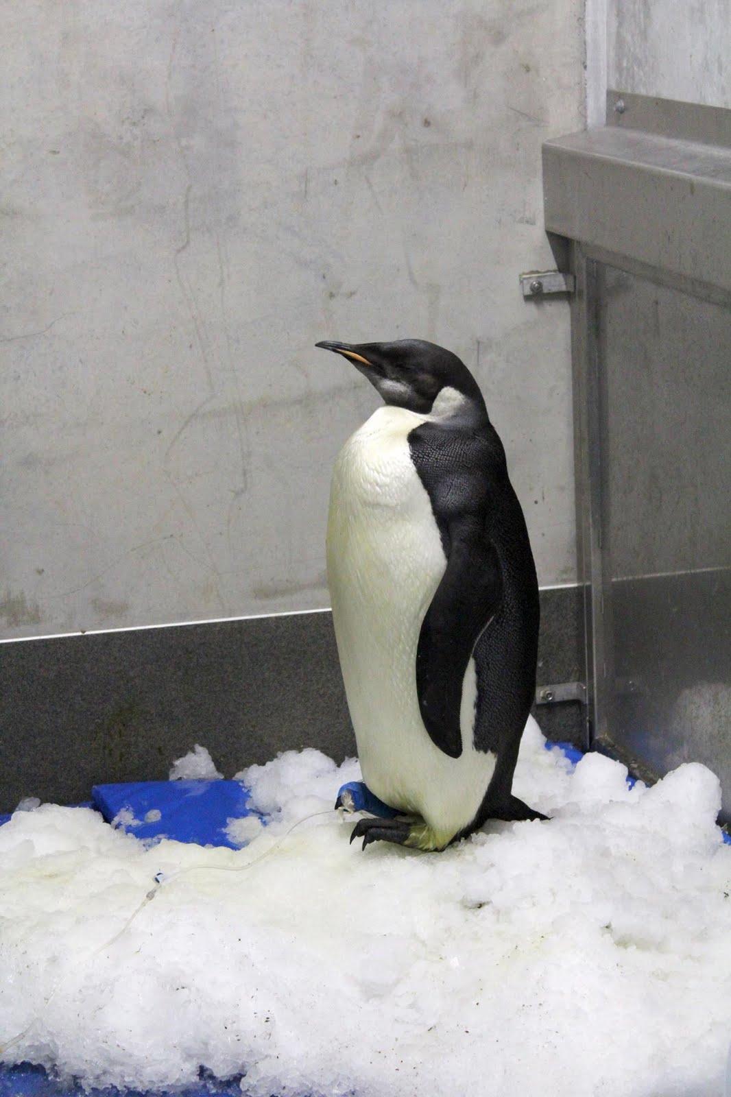 Happy Feet: The Essential Guide | Happy Feet Wiki | FANDOM ... |Happy Feet Zoo Aquarium