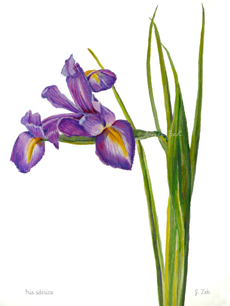 Janet Zeh Original Art Watercolor And Oil Paintings