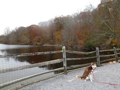 A Fall stroll around the lake