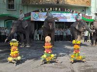 Kado Istimewa Buat 4 Gajah di Ulang Tahun ke-65 GL Zoo