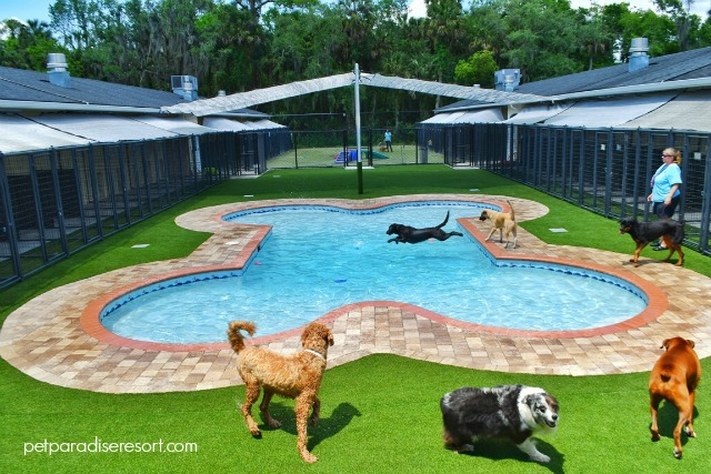 pet paradise resorts for pets
