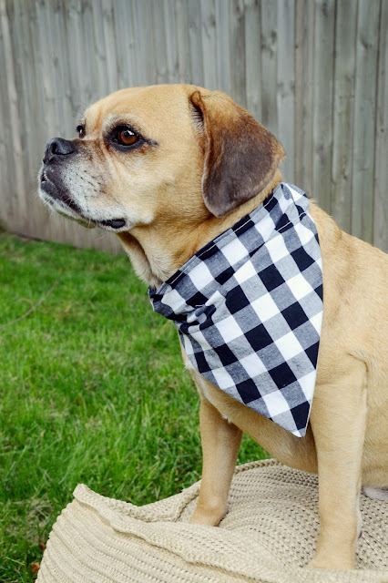 Easy DIY Reversible Dog Bandana Sewing Pattern /// By Design Fixation