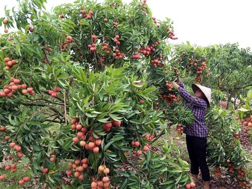 Nhà nước cần có biện pháp hỗ trợ nông dân