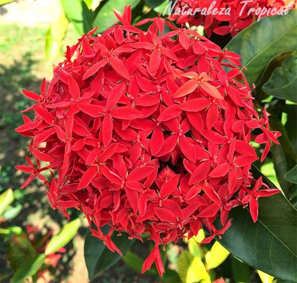 naturaleza tropical flores comunes en los jardines de cuba