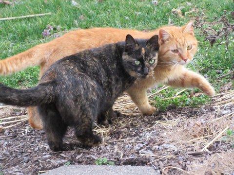 Cat play dates