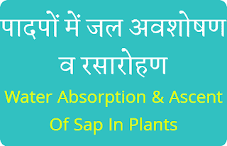 Water Absorption & Ascent Of Sap In Plants Hindi Notes PDF Download