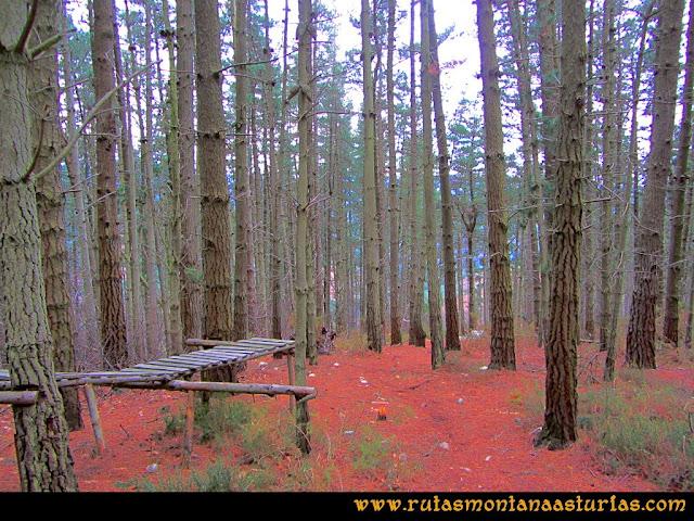 Rutas Montaña Asturias: Zona boscosa camino al área recreativa de la Degollada