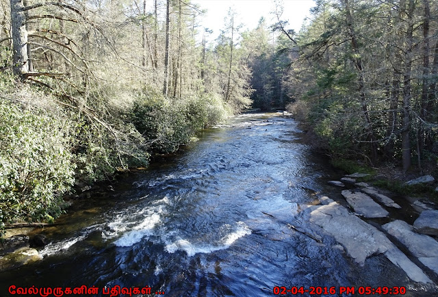 Little River in Dupont State Forest