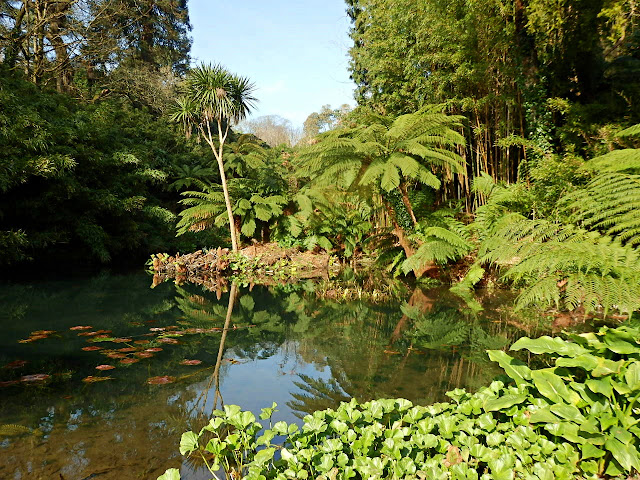 Jungle at Lost Gardens of Heligan, Cornwall