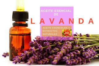 El aceite esencial de lavanda, uno de los más populares por sus propiedades analgesicas
