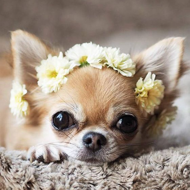 I was supposed to be the flower girl... sniff #puppy #flowers #adorable #feelings