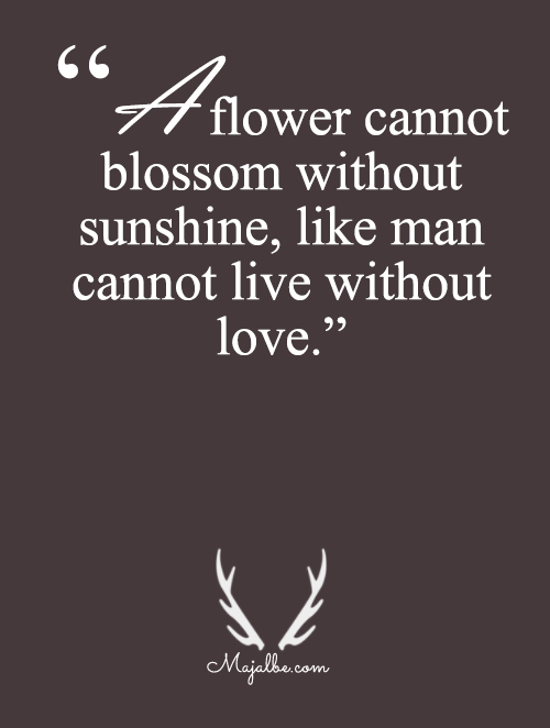 Cannot Blossom Without Sunshine
