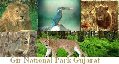 Animal in Gir Forest National Park