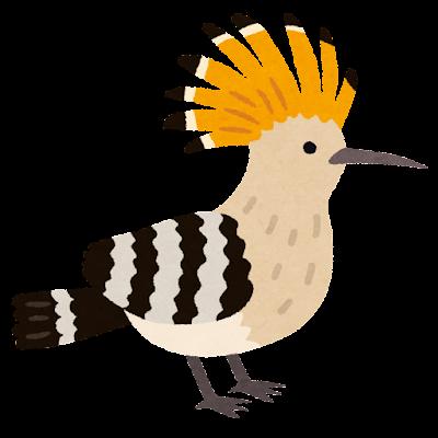 ヤツガシラのイラスト(鳥)