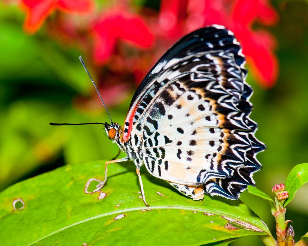 kupu-kupu-di-daun-hijau
