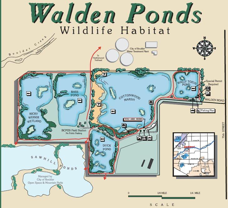 Colorado Lifestyle Walden Ponds Ducks Unlimited