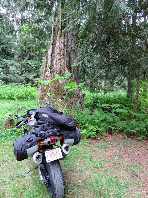 Aprilia Tuono Camping