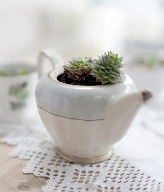 teapot planted with succulent