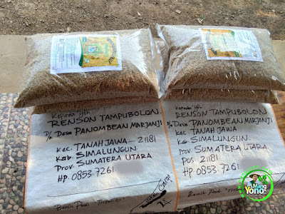 Benih pesana RENSON TAMPUBOLON Simalungun, Sumut.  (Sebelum Packing)