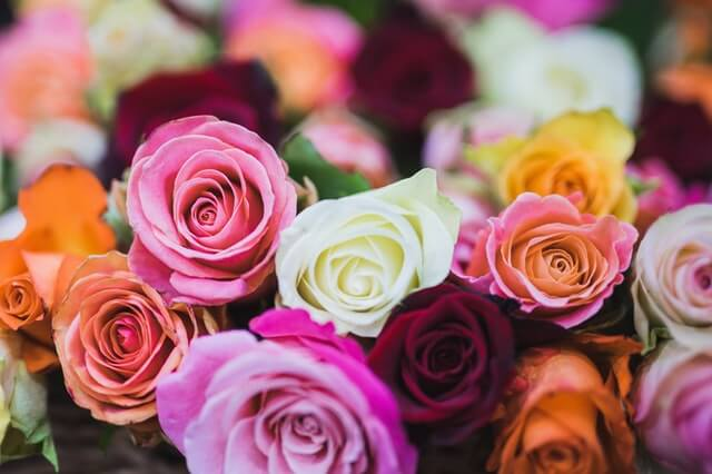 Assorted Color of Rose Flowers HD Copyright Free Image