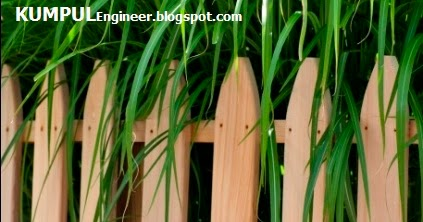 Tips menghilangkan lumut dan jamur di pagar rumah dari