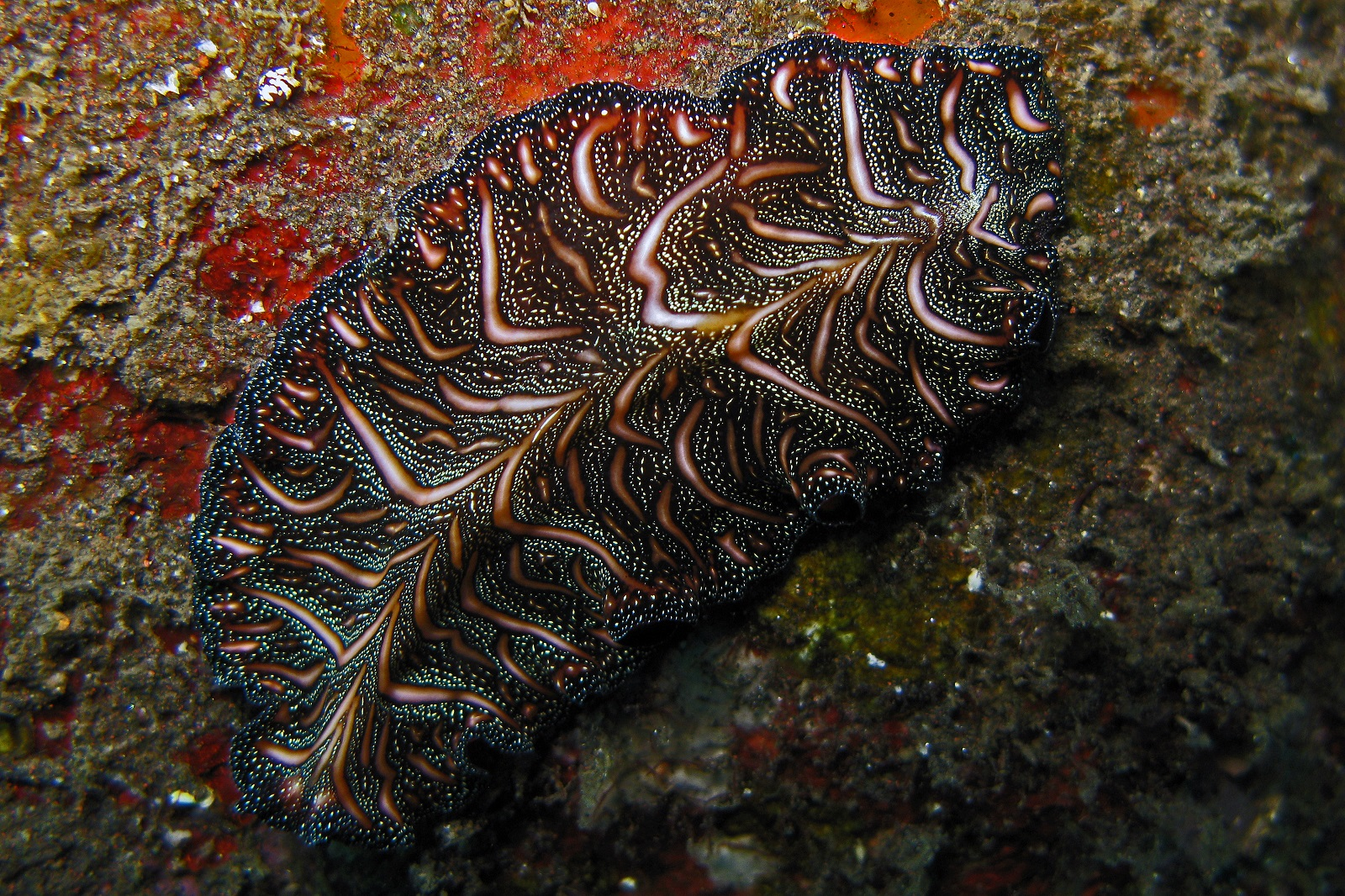 Persian Carpet Flatworm Floor Matttroy