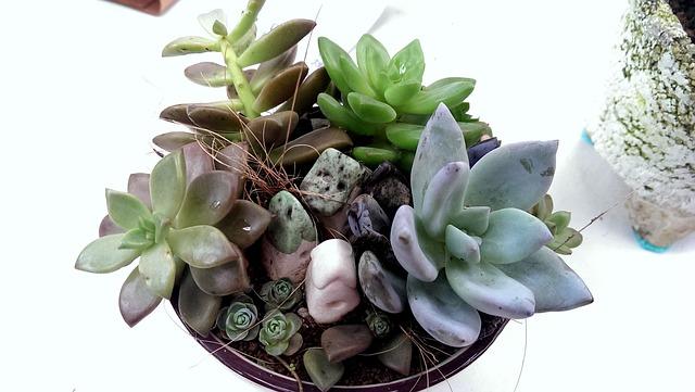 Las 10 plantas que necesitan menos agua amigos de la for Cactus cuidados exterior
