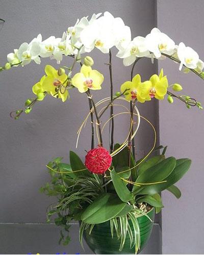 03 cành Hồ Điệp màu trắng & 02 cành hoa màu vàng .giá 1.150.000đ