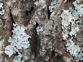 download materi biologi kelas x tentang jamur atau fungi