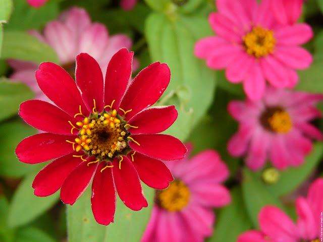 اجمل الورود في العالم بالصور