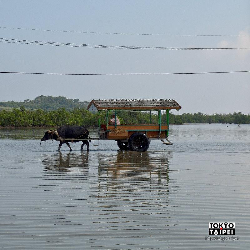 【由布島】乘著台灣水牛後代拉的車 造訪離島的離島的離島樂園