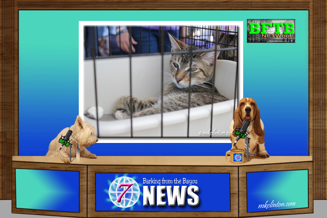 BFTB NETWoof News television set about a cat